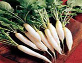 Radish Vegetable